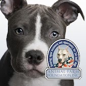 Talking Pit Bull Dogs with AFF