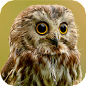 Owl Sound Bird Sounds icon
