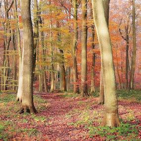 Autumn Colours by Ceri Jones - Landscapes Forests ( season, autumn, trees, forest, woodland, woods )