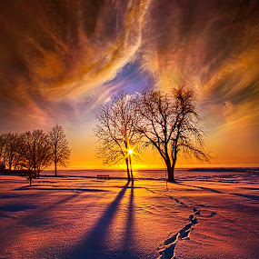 It's Time to Come Home by Phil Koch - Landscapes Prairies, Meadows & Fields ( vertical, photograph, farmland, yellow, storm, leaves, love, sky, nature, tree, autumn, shadow, snow, flower, wind, orange, twilight, agriculture, horizon, portrait, dawn, winter, environment, season, national geographic, serene, trees, floral, inspirational, natural light, wisconsin, phil koch, spring, photography, sun, farm, ice, horizons, rain, inspired, clouds, office, green, scenic, morning, wild flowers, field, red, blue, sunset, peace, fall, meadow, summer, sunrise, earth, landscapes, , HDR, Landscapes )