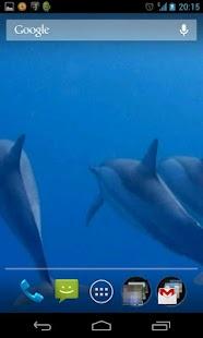 海豚3D。動態壁紙。