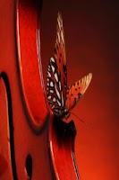 Screenshot of Butterfly Wallpapers HD