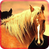 BEAUTIFULL HORSES