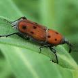 Beetles!