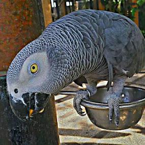 Hallo by Merah Putih - Animals Birds