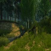 3D Summer Forest