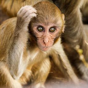 by Sanjay Nagaonkar - Animals Other Mammals