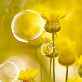Dream Bubbles & Yellow Flower