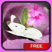 Pink Flower Waterdrop Live Wal