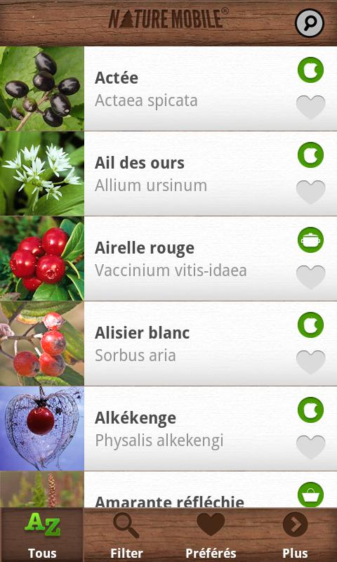 Wild Berries and Herbs FREE - screenshot