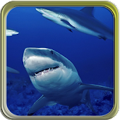 Puzzi puzzles sharks in HD