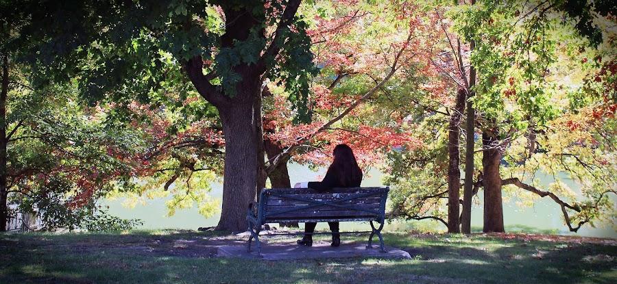 Enjoying the view by Marzena Sadowski - City,  Street & Park  Neighborhoods ( bench, park, fall, trees, view )