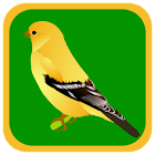 Quiz Bird icon