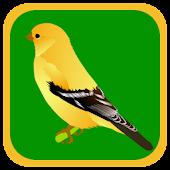 Quiz Bird