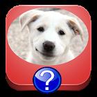 测验的犬种 icon