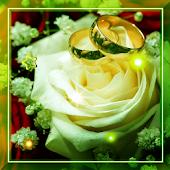 Spring Rose Best LWP