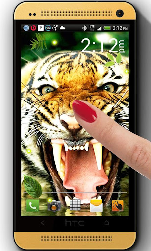 Jungles Tigers live wallpaper