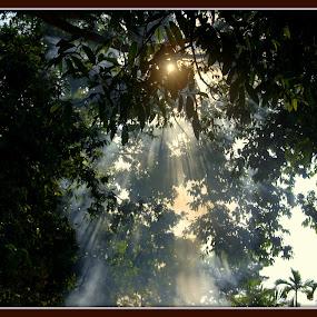 by Lem Kenhook - Nature Up Close Trees & Bushes