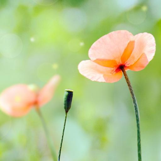 個人化App|花季动态壁纸 LOGO-3C達人阿輝的APP