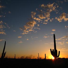 by Skye Stevens - Landscapes Deserts (  )