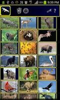 Screenshot of Power Animals Premium