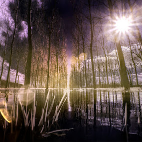 Flood in the poplar by Alberto Ghizzi Panizza - Landscapes Forests ( water, ir, poplar, infrared, flood, po, flare,  )