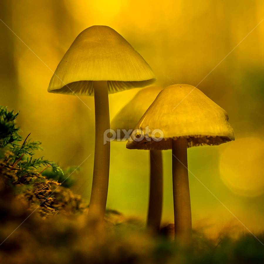 Fungis by Peter Samuelsson - Nature Up Close Mushrooms & Fungi