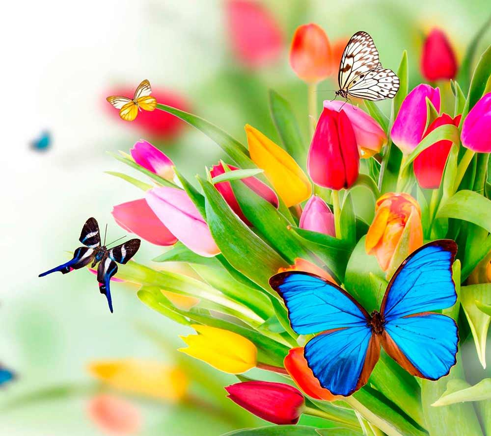 butterflies images wallpapers android apps on google play