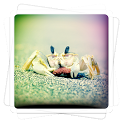 Aviary Effects: Toy Camera icon