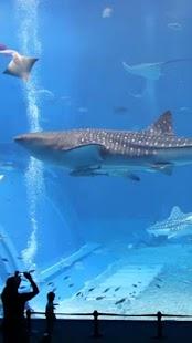 本物のサメ水族館LWP- スクリーンショットのサムネイル