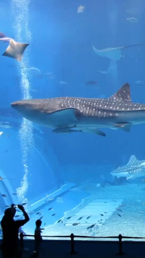 本物のサメ水族館LWP- スクリーンショット