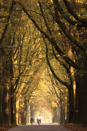 Autumn in the Netherlands.