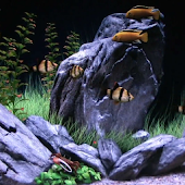 Tropical Fish Aquarium HD