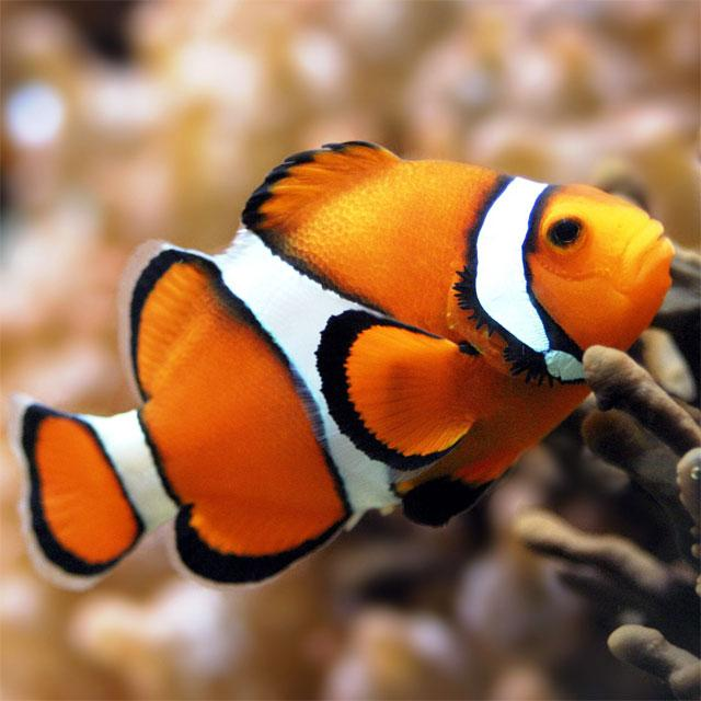 Fish Jigsaw Puzzles- screenshot