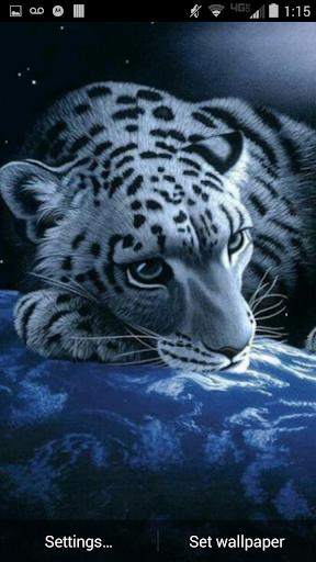 Leopard Cat Live Wallpaper