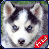 Husky+ Free