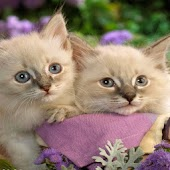 Cute Cats Backgrounds