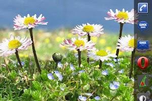 Screenshot of Daisy Flowers Free Wallpaper