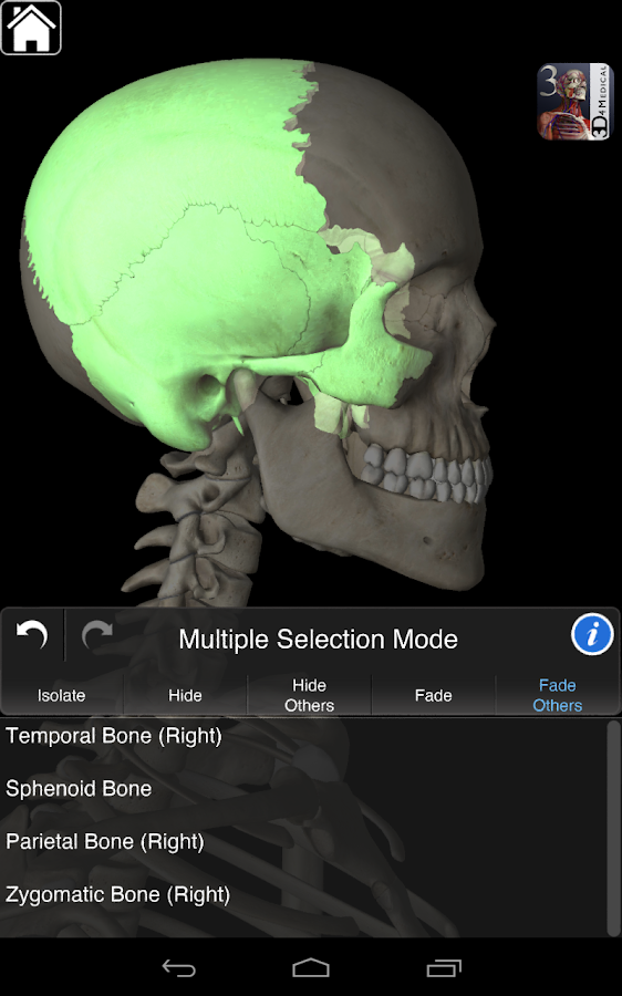 Essential Skeleton 3- screenshot