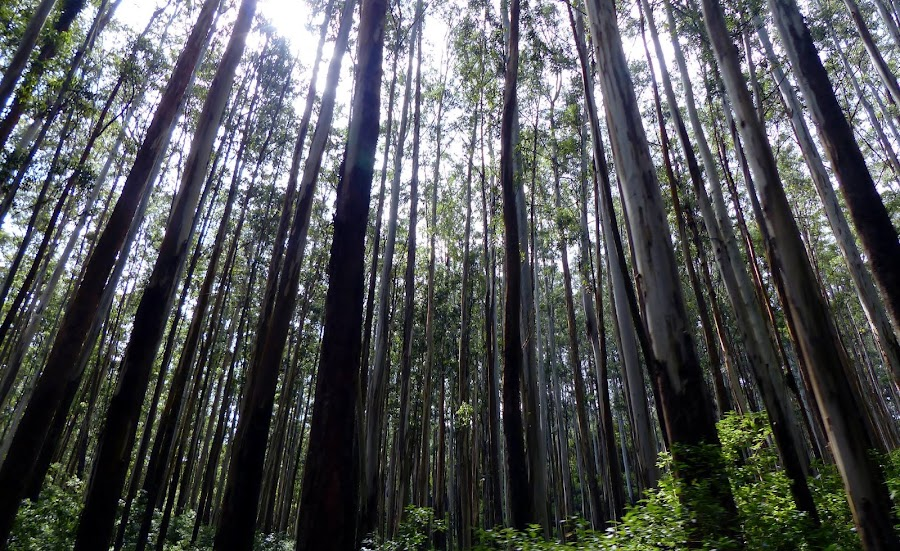 On the way to Ooty from wayanad by Hari Prasad - Nature Up Close Trees & Bushes