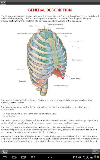 Gray's Back and Thorax