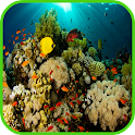 珊瑚壁纸 icon