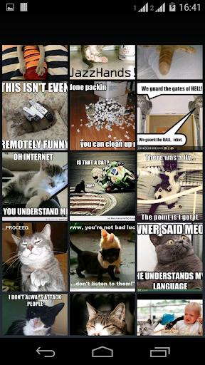 meme FUNNY CAT