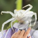 Spiders Water Touch icon