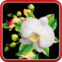 Orchids Wallpaper icon
