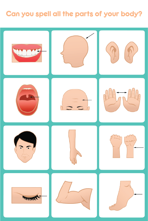 Kids Spell & Learn Body Parts - Android Apps on Google Play
