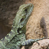 Reptile Spotters