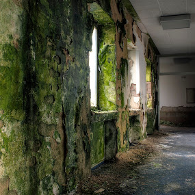when nature's taking over by Greg Warnitz  - Uncategorized All Uncategorized ( urban, walls, green, abandoned, decay )