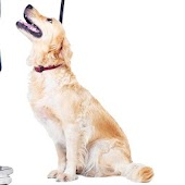 Dog Whistle Obedience Trainer