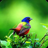 3D Bird Sounds